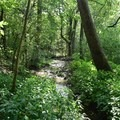 Forest foliage at George Washington Carver National Monument.- George Washington Carver National Monument