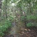 Williams Branch, a stream in George Washington Carver National Monument.- George Washington Carver National Monument