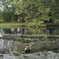 Turtles at Williams Pond in George Washington Carver National Monument.- George Washington Carver National Monument