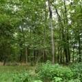 Forest foliage of George Washington Carver National Monument.- George Washington Carver National Monument