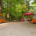 Tents line a campsite.- Rogers Rock Campground