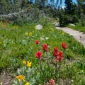Wildflowers along the route.- South Arapaho Peak