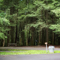 Most campsites are very shaded, a perfect escape from a hot southern summer.- Cumberland Mountain State Park Campground