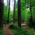 The trail to the campground from the amphitheater.- Loon Lake Recreation Site