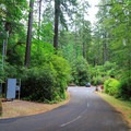 Road to the campground.- Loon Lake Recreation Site Campground