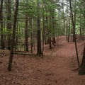 The trail follows a nice route lined with conifer and hardwood trees.- Millbrook Falls