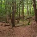 Section of the wooded trail.- Millbrook Falls