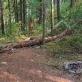 Campsite near Welcome Creek.- Elk Lake Creek: North Trailhead to Battle Creek