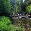 Wildflowers along the southeast bank of Elk Lake Creek.- Elk Lake Creek: North Trailhead to Battle Creek