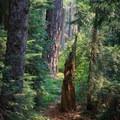 Massive Douglas fir trees along the trail.- Elk Lake Creek: North Trailhead to Battle Creek