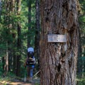 Occasional trail number markings.- Elk Lake Creek: North Trailhead to Battle Creek