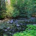 Battle Creek near the campsites.- Elk Lake Creek: North Trailhead to Battle Creek