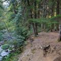Campsite along Elk Lake Creek.- Elk Lake Creek: North Trailhead to Battle Creek