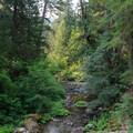 Elk Lake Creek from the campsite bluff.- Elk Lake Creek: North Trailhead to Battle Creek