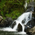 The upper falls. The view is limited from the edge of the brook.- Northwest Bay Brook Falls