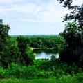 Bluff overlooking the Apalachicola River.- Torreya Trail