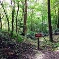 A historical site along the Torreya Trail.- Torreya Trail