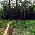 Hiking the Torreya Trail.- Torreya Trail
