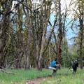 Begin the large descent from the Sky Rim Trail on the Black Butte Trail.- Sky Rim Trail: Specimen Creek to Black Butte