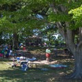 Setting up a picnic in the natural shade of the trees.- Sandy Point State Park