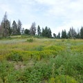 Mountain prairie on Mores Mountain.- Shafer Butte and Mores Mountain Trailhead