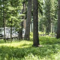 Thick vegetation offers pretty good privacy.- Seeley Lake Campground