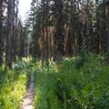 Gunsight Pass Trail tours beautiful forest.- Florence Falls