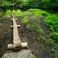 Wooden planks line some of the muddy portions of trail.- The Wolfjaws