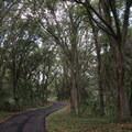 One of the park's nature trails meanders through an oak canopy.- Bill Frederick Park + Campground at Turkey Lake