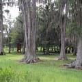 Lush vegetation is spread throughout the park.- Bill Frederick Park + Campground at Turkey Lake
