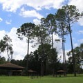Pine trees and blue skies.- Bill Frederick Park + Campground at Turkey Lake