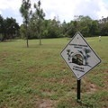 The entire area is an endangered gopher tortoise habitat.- Bill Frederick Park + Campground at Turkey Lake