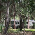 The sites are comfortably shady.- Bill Frederick Park + Campground at Turkey Lake