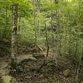 Dense broadleaf forest along the trail to Skinny Dip Falls.- Skinny Dip Falls