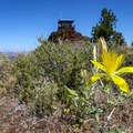 Wildflowers just beneath the fire lookout atop the butte.- Schonchin Butte