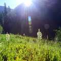 Sunlight streams through West Eagle Creek Meadow.- Echo Lake and Traverse Lake