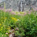 Summer runoff and wildflowers.- Gunsight Pass Trail