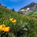 Bigelow's sneezeweed and Indian paintbrush dot the landscape as you ascend to higher elevations.- Franklin Lake