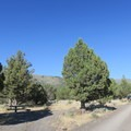 South Steens Campground.- South Steens Campground