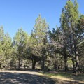 A coveted shady campsite at South Steens Campground.- South Steens Campground
