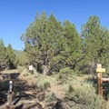 Big Indian Gorge Trailhead at South Steens Campground.- South Steens Campground