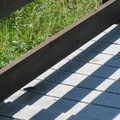 Watch for lizards escaping the heat of the sun at the Eight Dollar Mountain Boardwalk.- Eight Dollar Mountain Interpretive Boardwalk