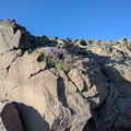 Rocky terrain along the Steens Mountain Summit Hike.- Steens Mountain Summit Trail