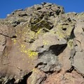 Green lichen at the Steens Mountain summit.- Steens Mountain Summit Trail