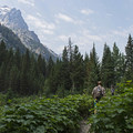 The trail has a ton of variety.- Cascade Canyon via South Jenny Lake
