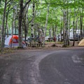 The road to the woodland camping area.- Chéticamp Campground