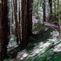Muir Woods National Monument.- Muir Beach to Stinson Beach via Muir Woods National Monument