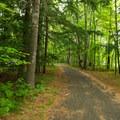 The bike path runs near the swimming beach.- Fish Creek Pond State Park