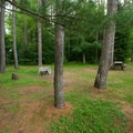 A typical site.- Meacham Lake Campground