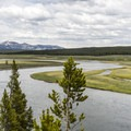 The Yellowstone River.- Hayden Valley